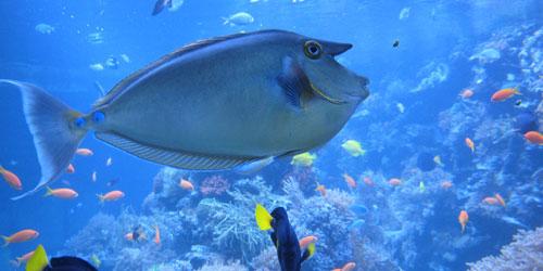 Morscy iluzjoniści- podwodne pejzaże