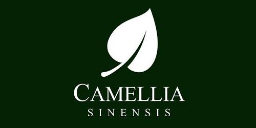 Camellia Sinensis 1836